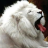 lionosh